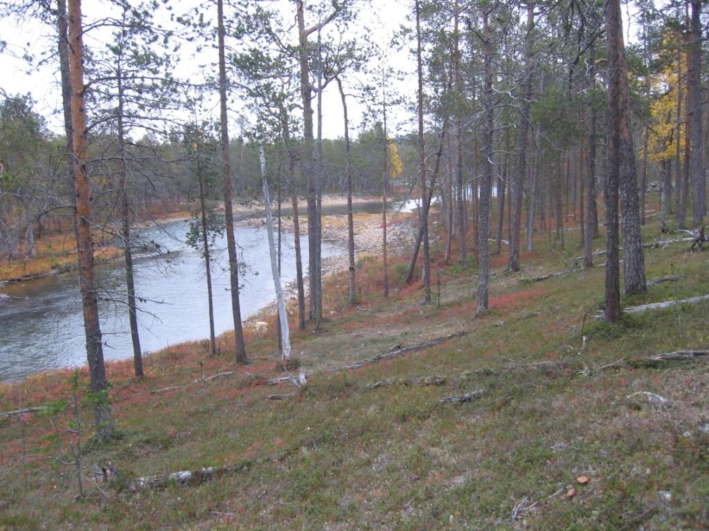 Suomujoki Porttikosken alapuolelta 20.9.2008