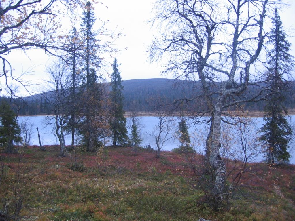Pikku Luirojärvi ja Pälkkimäpään rinne 22.9.2008