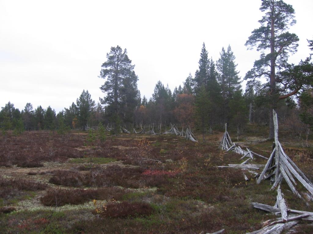 Vanha poroaita liki Apujoukkojenvaaraa 22.9.2008