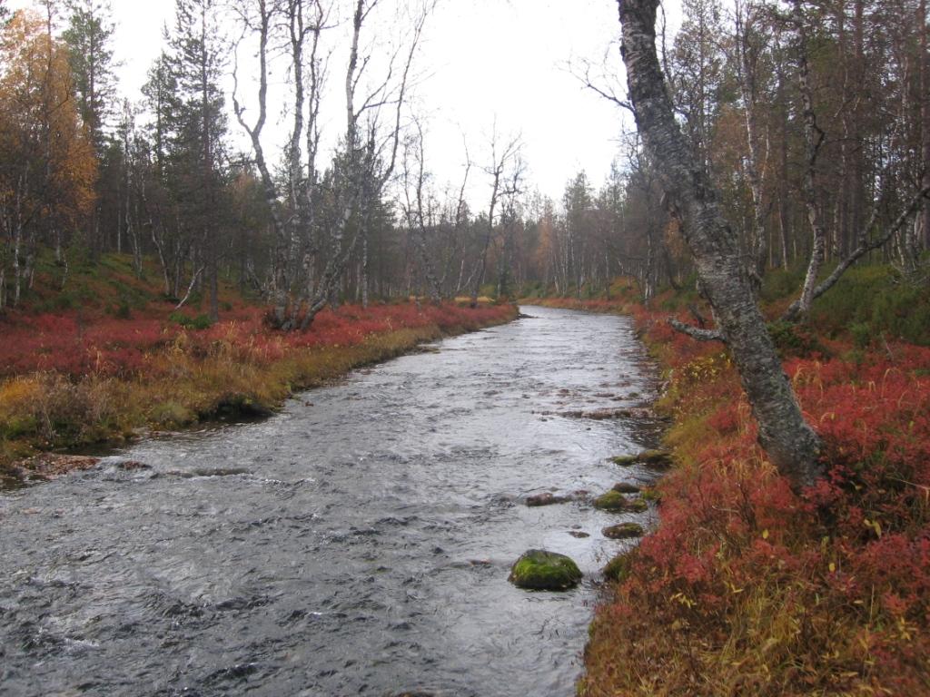 Tuiskujoki liki Suomujokea 24.9.2008