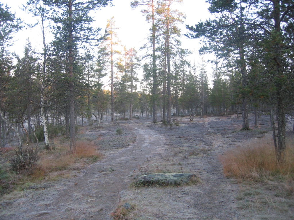 Suomunruoktulta kohti Kiilopäätä 25.9.2008